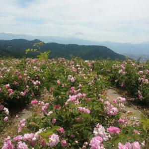 農場富士山